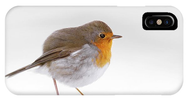 Red Robin In The White Snow IPhone Case