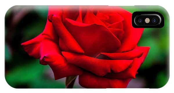 Fall Flowers iPhone Case - Red Rose 2 by Az Jackson