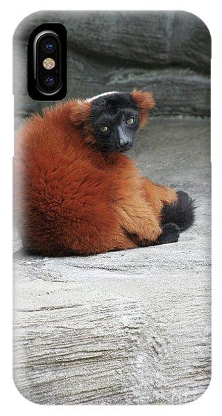 Red Ruffed Lemur IPhone Case