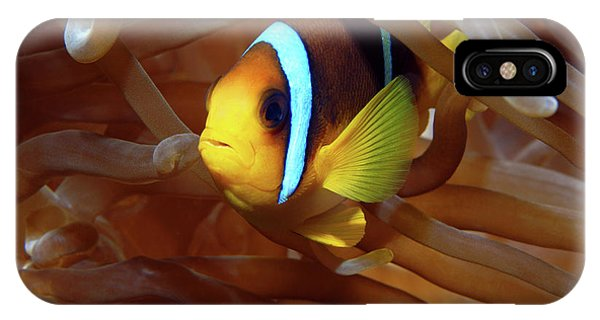Red Sea Clownfish, Eilat, Israel 8 IPhone Case