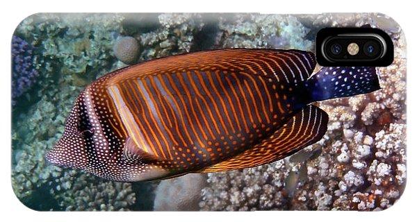 Red Sea Sailfin Tang 3 IPhone Case