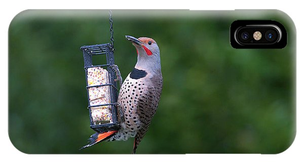 Northern Flicker iPhone Case - Red-shafted Northern Flicker On Suet by Sharon Talson
