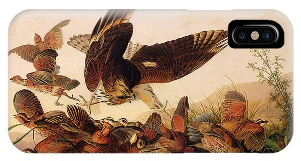 Red Shouldered Hawk Attacking Bobwhite Partridge IPhone Case