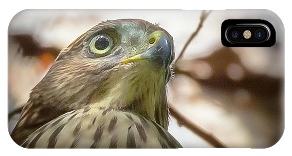 Red-shouldered Hawk Fledgling 3 IPhone Case