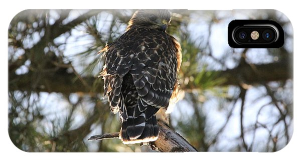 Red Shouldered Hawk Fledgling IPhone Case