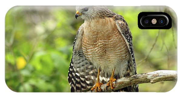 Red-shouldered Hawk IPhone Case