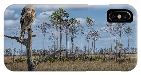 Red Shouldered Hawk In The Florida Everglades IPhone Case