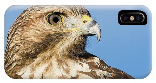 Red-shouldered Hawk Portrait - Winged Ambassador IPhone Case