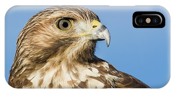 Red-shouldered Hawk Portrait - Winged Ambassador IPhone Case