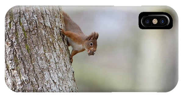 Red Squirrel Climbing Down A Tree IPhone Case