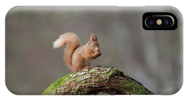 Red Squirrel Eating A Hazelnut IPhone Case
