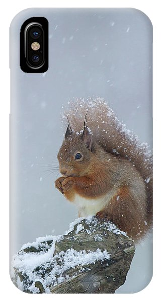 Red Squirrel In A Blizzard IPhone Case