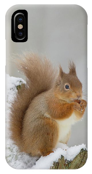 Red Squirrel In The Snow Side On IPhone Case