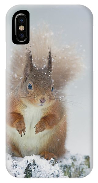 Red Squirrel In Winter IPhone Case