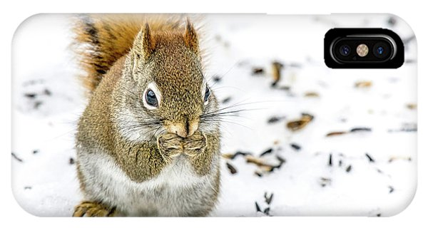Red Squirrel IPhone Case