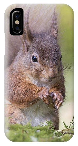 Red Squirrel - Scottish Highlands #1 IPhone Case