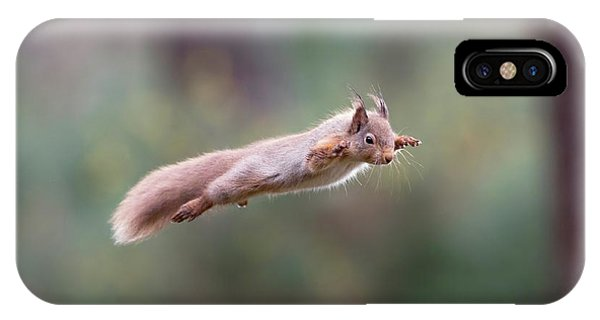 Red Squirrel Leaping IPhone Case