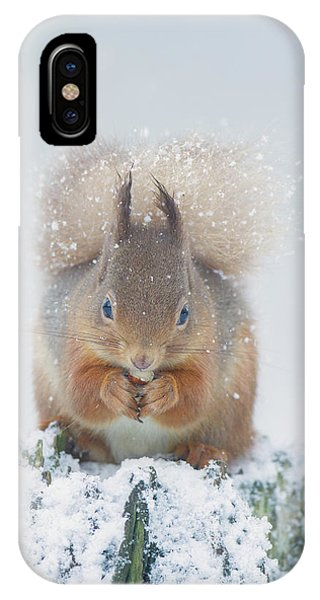 Red Squirrel Nibbles A Nut In The Snow IPhone Case