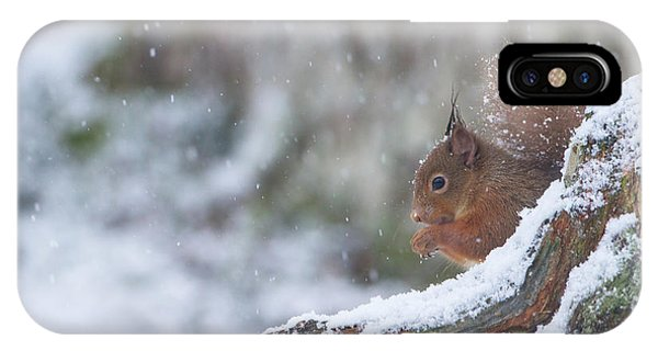 Red Squirrel On Snowy Stump IPhone Case