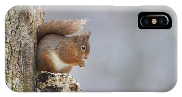 Red Squirrel On Tree Fungus IPhone Case