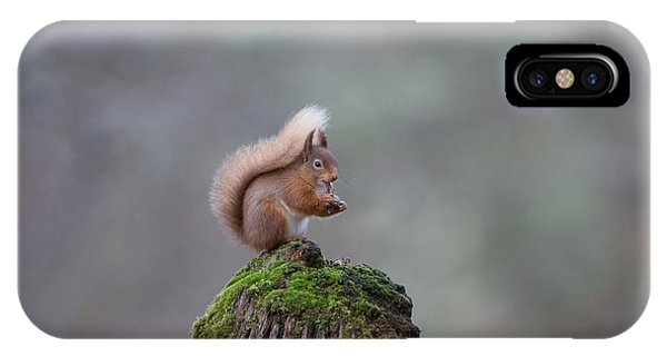 Red Squirrel Peeling A Hazelnut IPhone Case