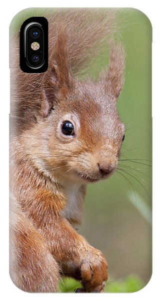 Red Squirrel - Scottish Highlands  #17 IPhone Case