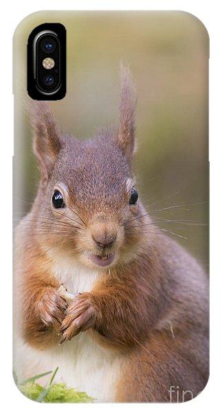 Red Squirrel - Scottish Highlands #18 IPhone Case