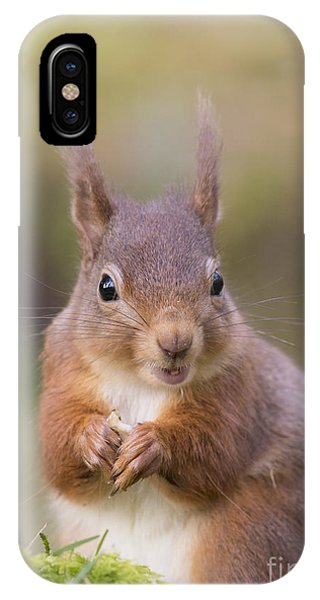 Red Squirrel - Scottish Highlands #18 IPhone Case