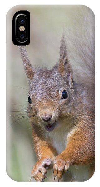 Red Squirrel - Scottish Highlands #26 IPhone Case