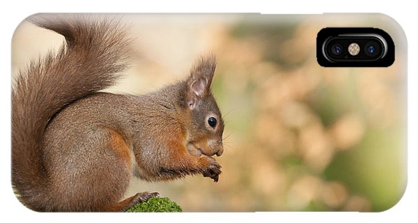 A Moment Of Meditation - Red Squirrel #27 IPhone Case