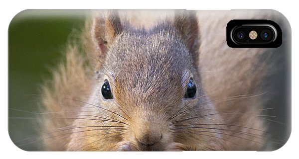 Red Squirrel - Scottish Highlands #28 IPhone Case