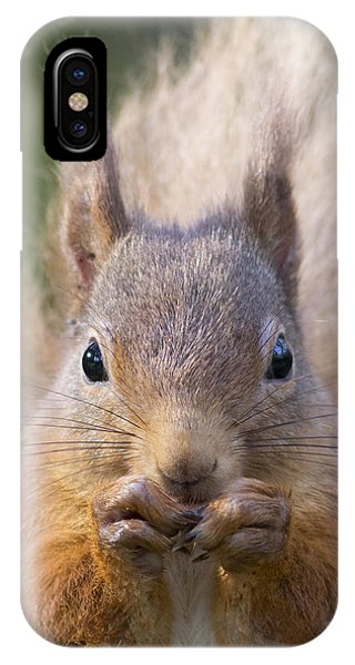Red Squirrel - Scottish Highlands #28 IPhone Case