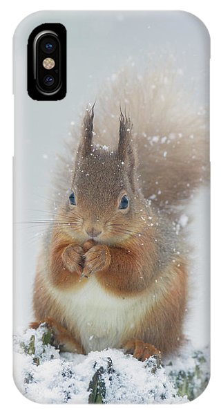Red Squirrel With Snowflakes IPhone Case