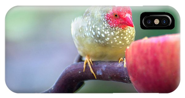 Red Star Finch IPhone Case