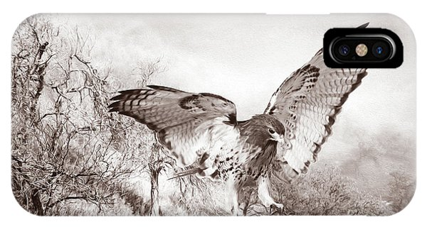 Red Tail Hawk iPhone Case - Red-tail Autumn Black And White by Laura D Young