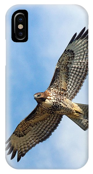 Red Tail Hawk iPhone Case - Red Tail Hawk by Randall Ingalls