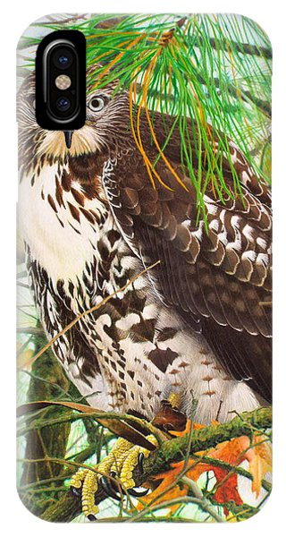 Red Tail Hawk iPhone Case - Red Tail Hawk, Thistle by Ken Everett