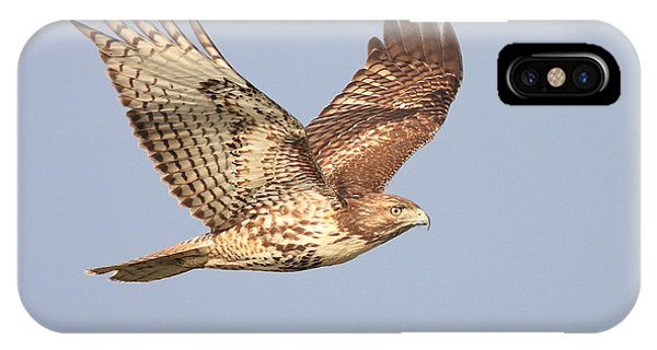 Red Tailed Hawk 20100101-1 IPhone Case