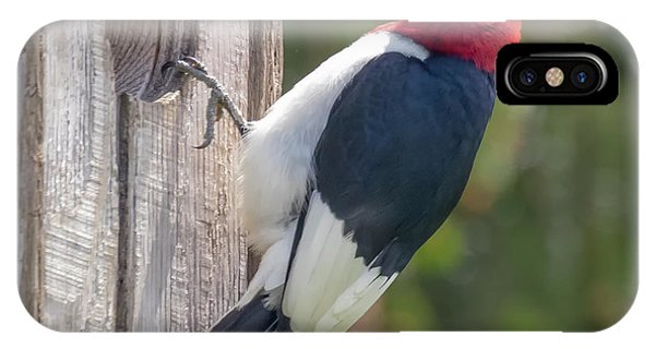 IPhone Case featuring the photograph Red-headed Woodpecker 2018  by Ricky L Jones