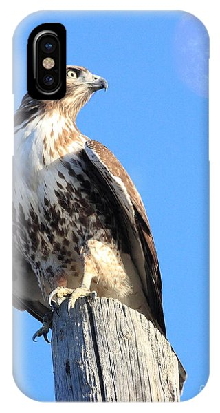Wingsdomain iPhone Case - Red Tailed Hawk And Moon by Wingsdomain Art and Photography