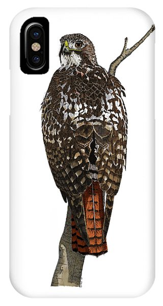 Red-tailed Hawk - Color IPhone Case