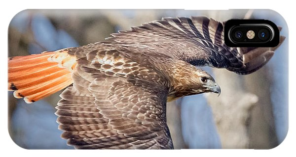 Red Tailed Hawk Flying IPhone Case