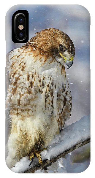 Red Tailed Hawk, Glamour Pose IPhone Case