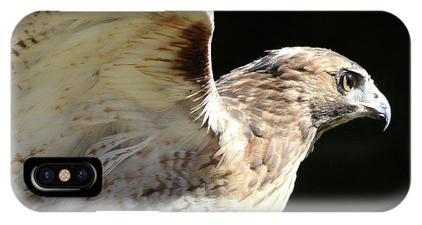 Red-tailed Hawk In Profile IPhone Case