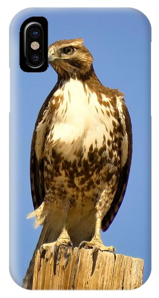 Red-tailed Hawk On Post IPhone Case