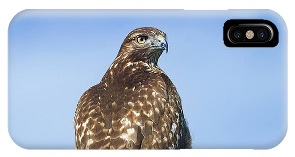 Red-tailed Hawk Perched Looking Back Over Shoulder IPhone Case