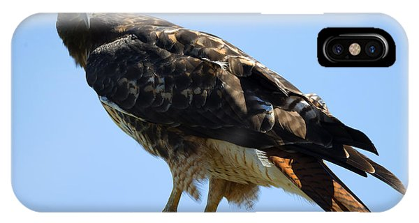 Red Tail Hawk iPhone Case - Red-tailed Stare by Mike Dawson