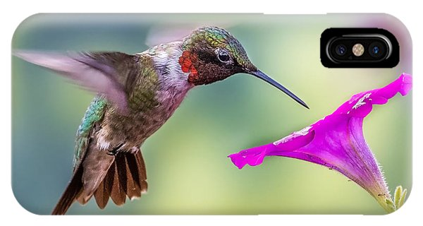 IPhone Case featuring the photograph Red Throated Hummingbird by Allin Sorenson
