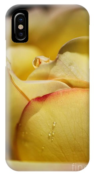 Red Tipped Yellow Rose IPhone Case