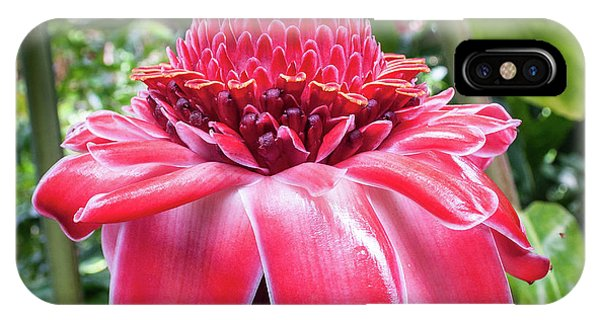 Red Torch Ginger Flower IPhone Case